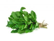 Fresh Mint (Bundle)
