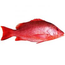 Red Snapper Fish 1kg (Approx) - Frozen